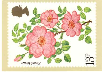 view larger image for PHQ No.16 (1976) - Roses<br/>Set of four cards