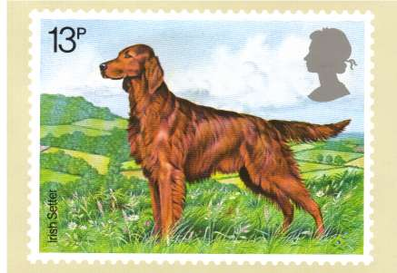 view larger image for PHQ No.33B (1979) - Dogs set of four cards<br/>