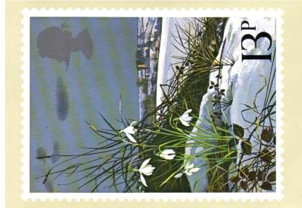 view larger image for PHQ No.34B (1979) - British Wild Flowers set of four cards each bearing a <br/>Traffic Light Gutter Pair!<br/>